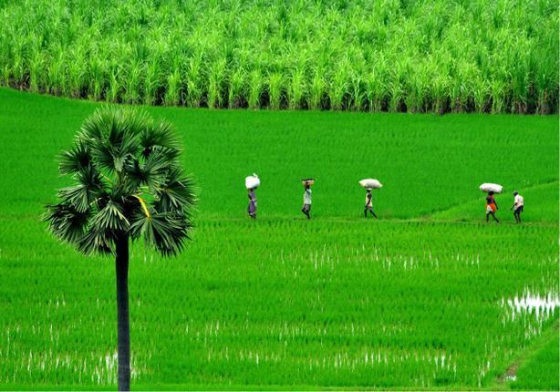 Kadapa Agriculture Dept Recruitment